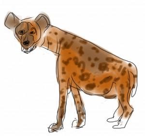 Hyena, Hyäne
